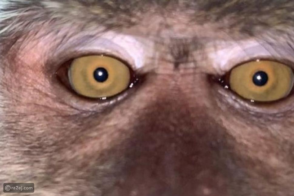 شاب يقفد هاتفه المحمول ليجد مفاجئة طريفة من السارق: ماعلاقة القرود؟