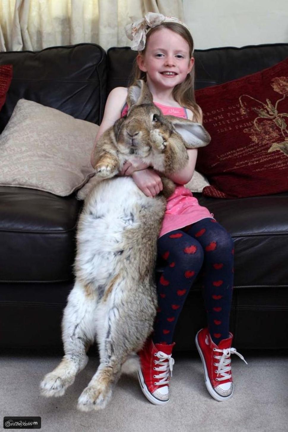سرقة الأرنب الأضخم في العالم: هذا وزنه ومكافأة مالية لمن يعثر عليه