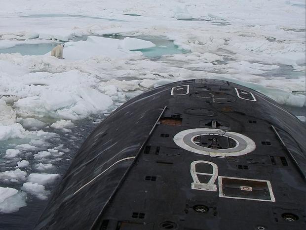 الدب القطبي يمضي في إتجاه الغواصة
