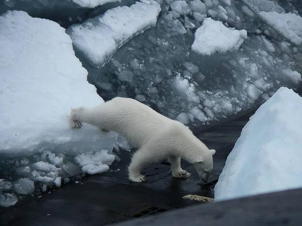 الدب يرصد مكان الغواصة
