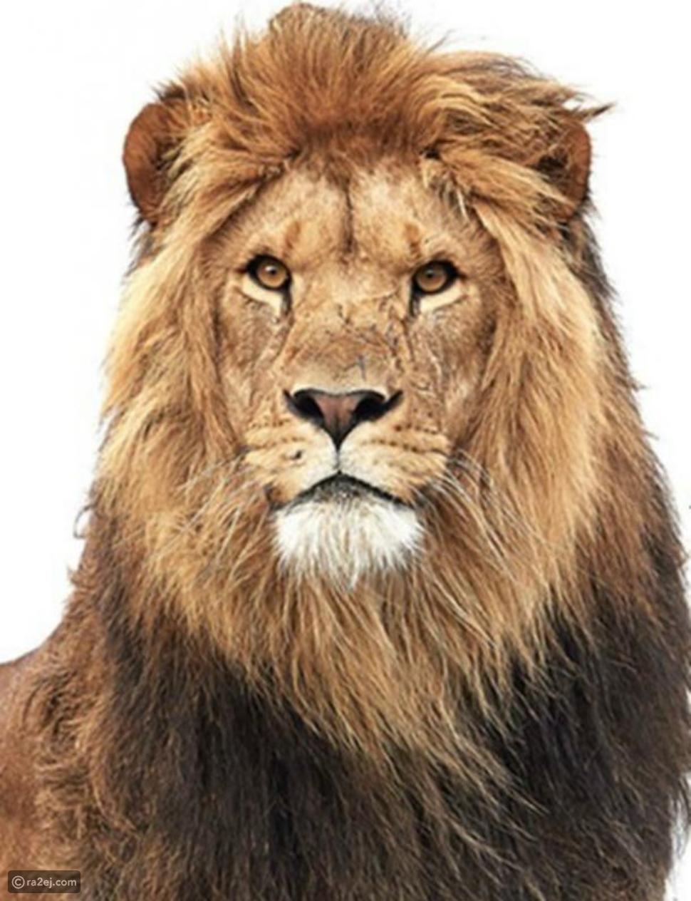 اختبار: أول حيوان تراه بالصورة يكشف سمات شخصيتك التي تخفيها عن العالم