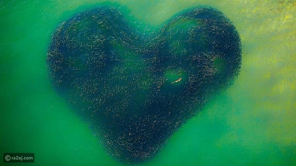 ظهور قلب كبير في وسط البحر: الصورة حيرت السوشيال ميديا