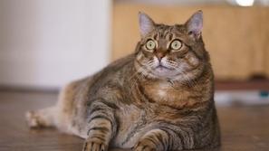 ما هي حقيقة دواء القطط الذي يعالج كورونا؟