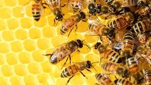 معلومات لا تعرفها عن النحل.. الذكر لديه 13 ألف عديسة لهذا السبب