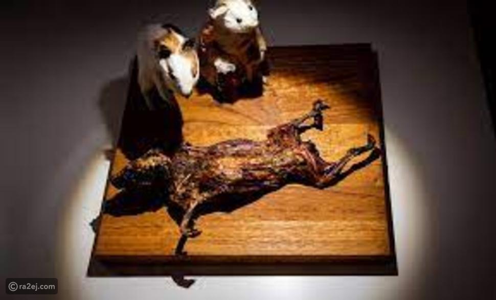 لن تصدق: متحف في السويد متخصص في تقديم تجربة تناول الطعام المقزز