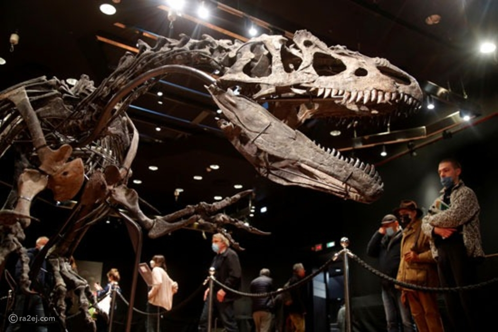 بيع هيكل عظمي لديناصور نادر برقم صادم: يبلغ طوله 10 أمتار