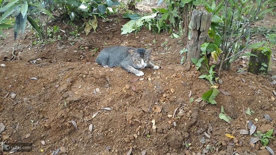 قطة تلازم قبر صاحبتها لمدة عام وترفض التخلي عنها.. صور مؤثرة تمس القلب