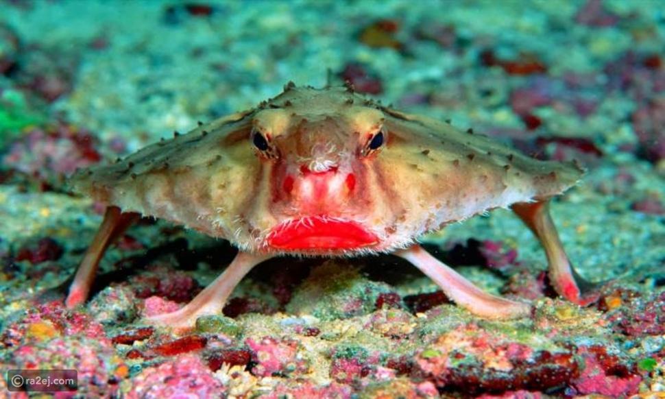 ما هو نوع السمك الذي لا يستطيع أن يسبح؟