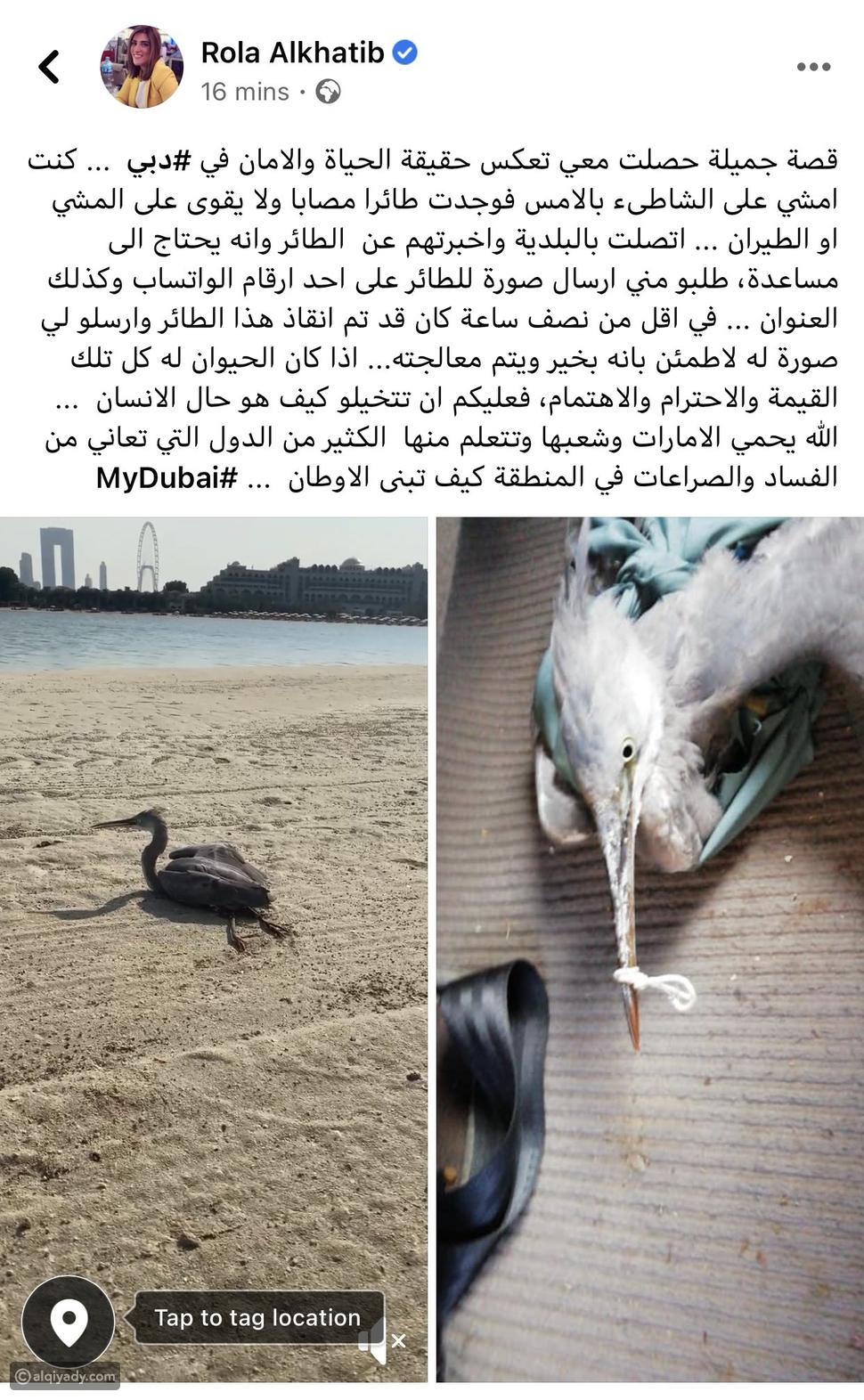 حاكم دبي يتفاعل مع رولا الخطيب بسبب طائر: شكراً لقصتك الجميلة