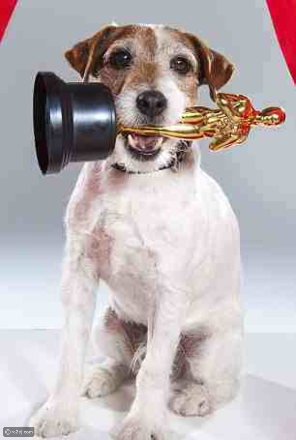 حفل جوائز الأوسكار: كلب يخطف الأضواء من نجوم هوليود.. إليك قصته