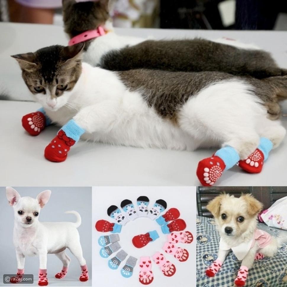 قائمة بأغرب الأشياء التي يفعلها الناس لحيواناتهم الأليفة