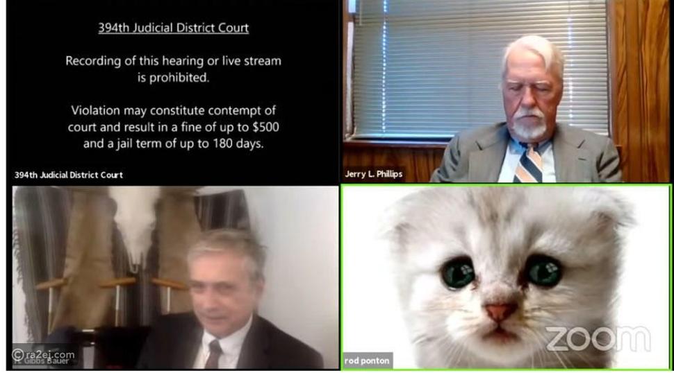 أنا لست قطة: أغرب موقف لمحامي عبر تطبيق زووم
