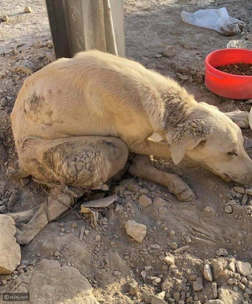 مغتصب كلب الرياض يثير موجة من الغضب عبر السوشيال ميديا