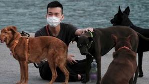 الصين لن تأكل القطط والكلاب مجدداً: ماذا حدث؟