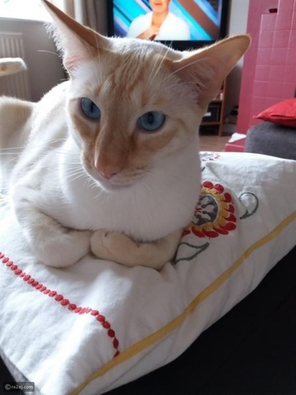 دخلت في غيبوبة وقطع جزء من ذراعها بسبب قطتها!