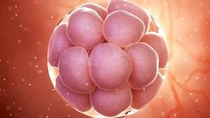 تطور جديد في تكوين الأجنة يعطي أملاً للمصابين بالعقم.. حمل دون بويضات