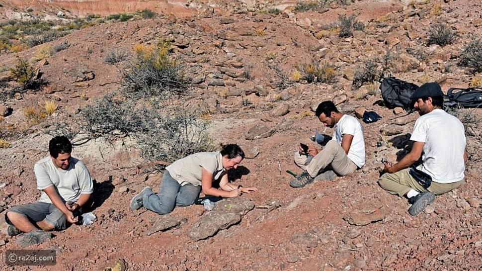اكتشاف نوع جديد من الديناصورات: عاشت قبل 90 مليون سنة
