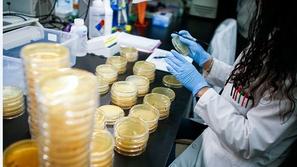 مفاجأة مرعبة: العلماء يكتشفون 40 نوعاً جديداً من فيروس كورونا
