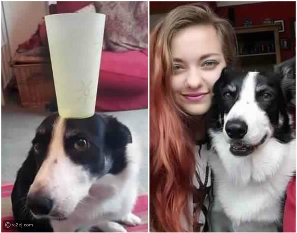 هذا الكلب يتمتع بمهارة غريبة أثارت دهشة رواد مواقع التواصل.. صور