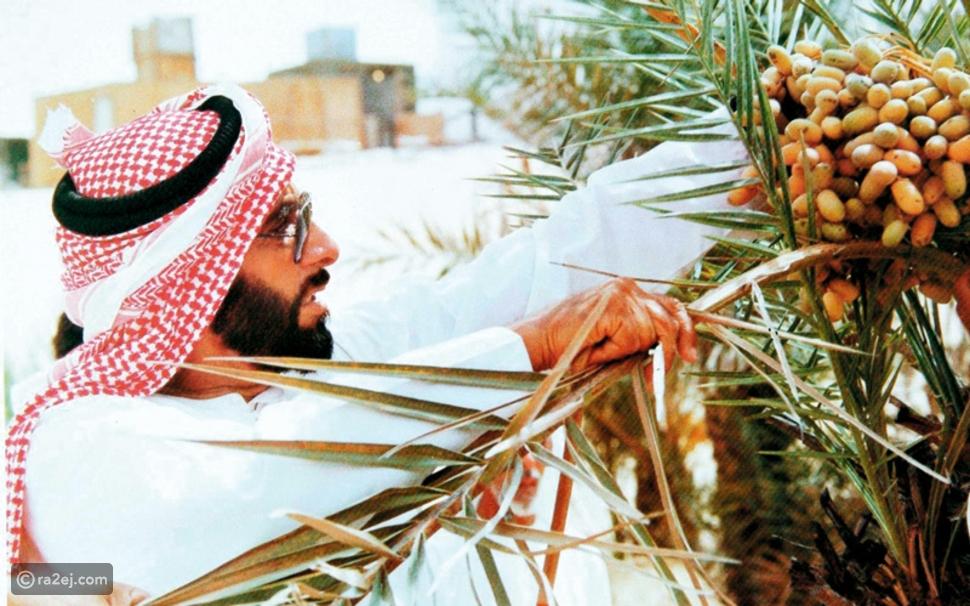 الشيخ زايد واهتمامه بزراعة النخيل