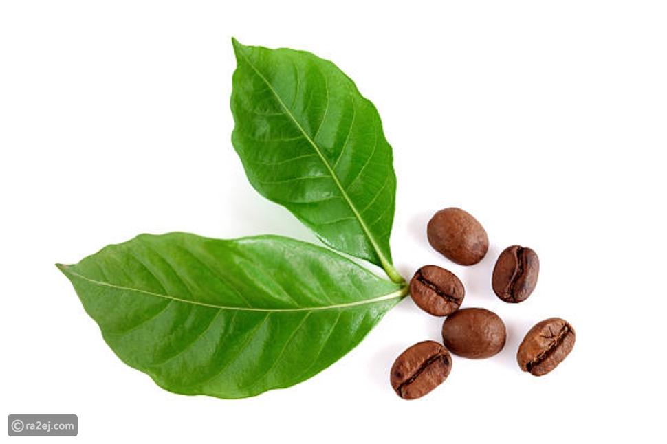 Drink coffee leaves