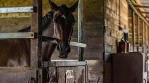 في ألمانيا: انزعج الحصان فحكمت المحكمة لصالحه