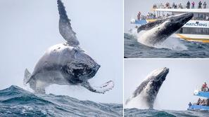 لقطات مخيفة تحولت إلى مدهشة.. حوت أحدب يفاجئ قارب سياحي في عرض البحر