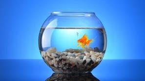 قصة رجل اعتقد أن دواء الأسماك سيحميه من كورونا: وهذا ما حدث له