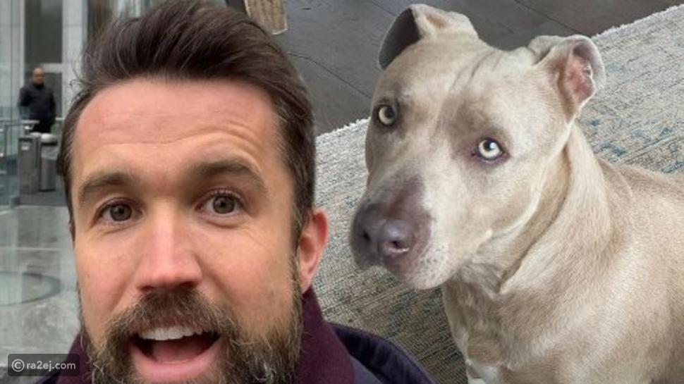 روب ماكيلهيني وزوجته يجمعان شمل كلب مفقود لعائلته في لقطة إنسانية