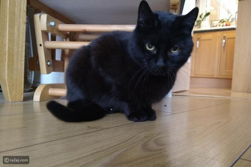 لم شمل قطة مع العائلة بعد أربع سنوات من هروبها