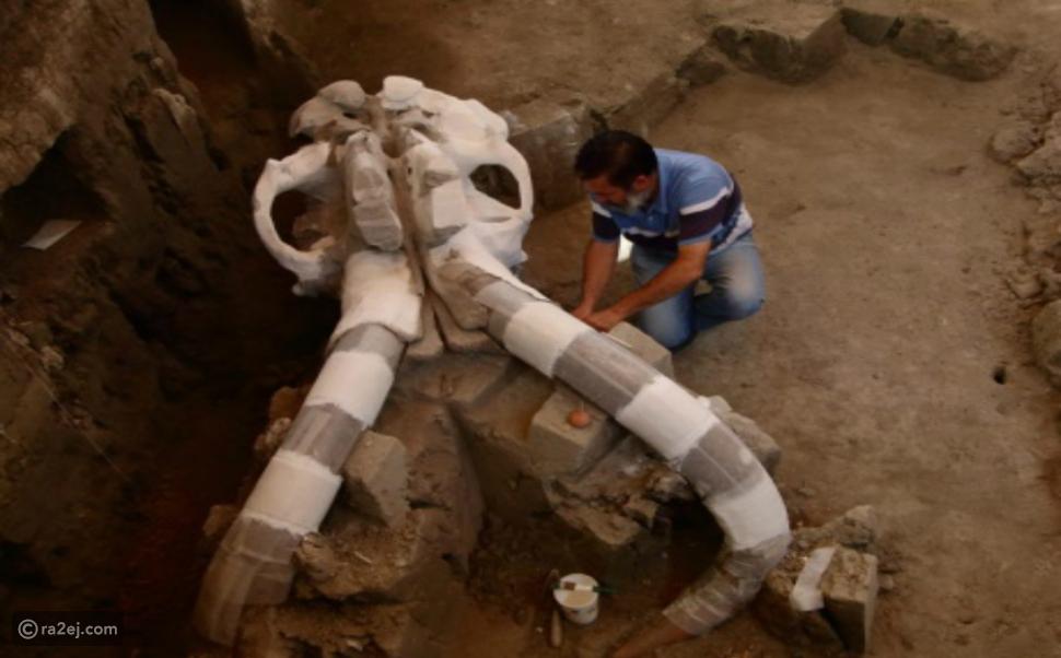 صور: أقدم جمجمة لحيوان الماموث عمرها سيدهشك