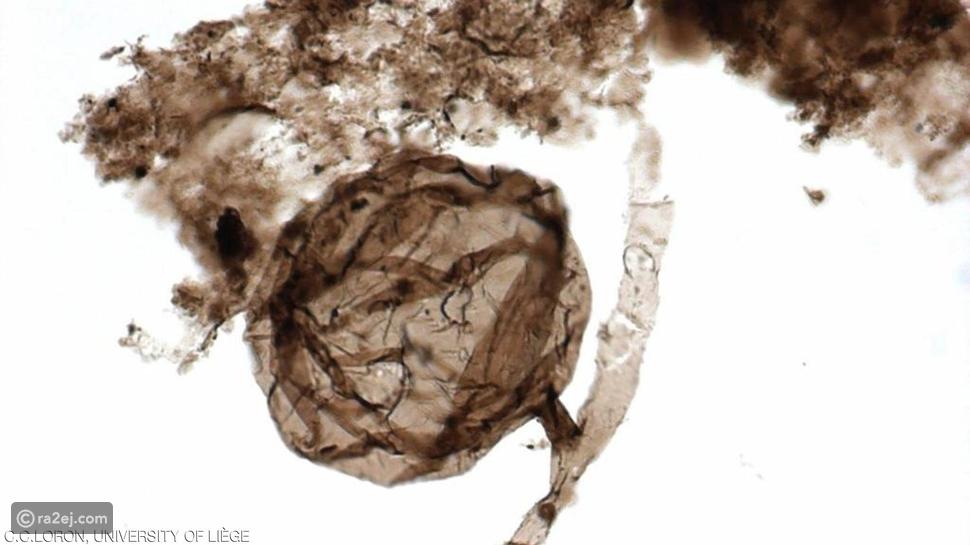 عمرها مليار سنة.. اكتشاف أقدم حفريات عرفها التاريخ البشرى على الإطلاق