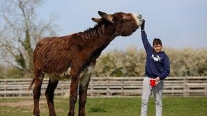 صور: حمار ضخم عمره 5 سنوات يقترب من تحقيق لقب الأطول في العالم