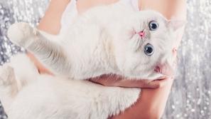 دولة آسيوية تقرر قتل مليوني قطة بطرق محظورة