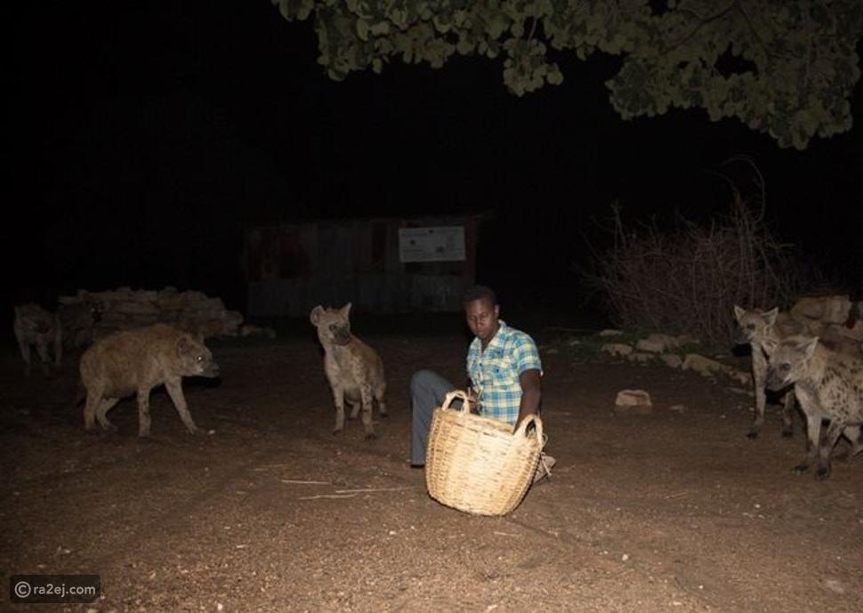 بالصورة قرية في إثيوبيا تروض الضباع !