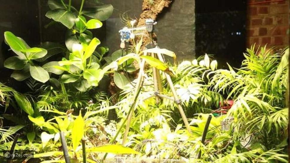 لأول مرة في العالم .. نبتة تلتقط صورة سيلفي بكاميرا تعمل بطاقتها