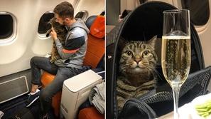 يخدع الجميع ويسافر مع قطه الممنوع من صعود الطائرة الآن ورطة في انتظاره