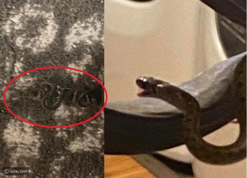 امرأة وجدت 18 ثعبانًا تحت سريرها وهذا رد فعلها