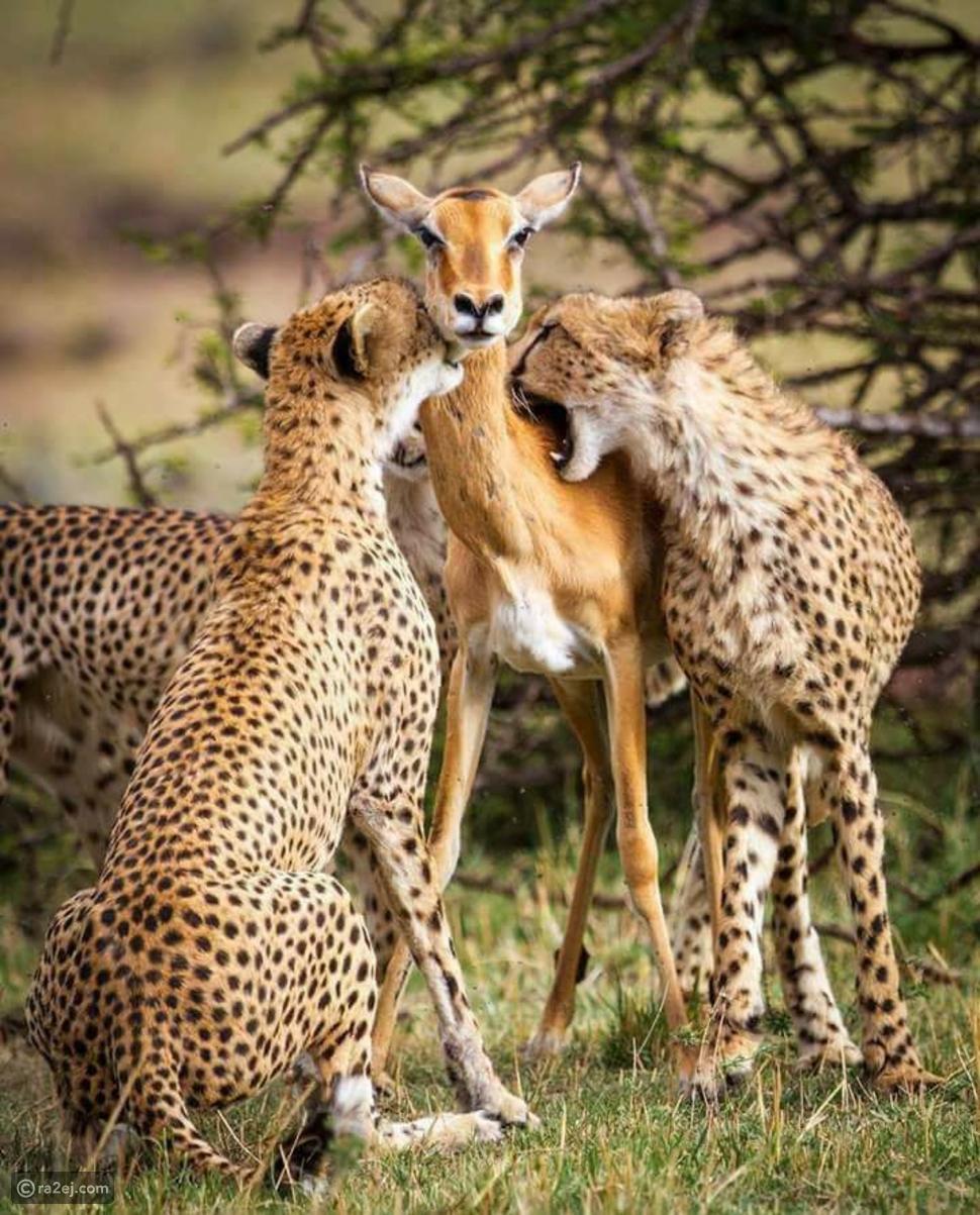 أكثر صورة مؤثرة في  عالم الحيوان