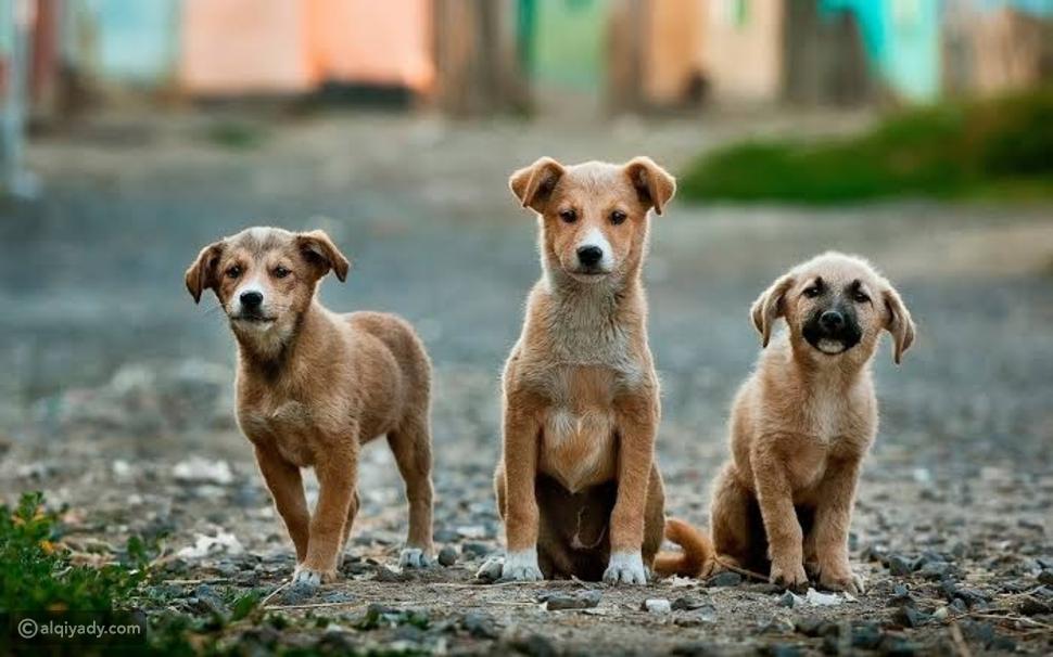 نصائح اتبعها قبل تربية حيوان أليف في منزلك
