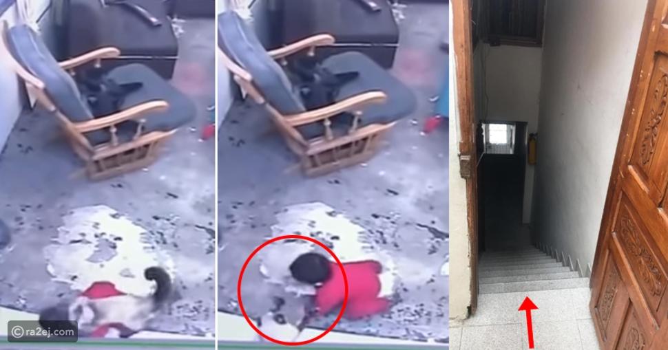 شاهد: قطة تنقذ رضيعاً من الموت قبل سقوطه من أعلى الدرج