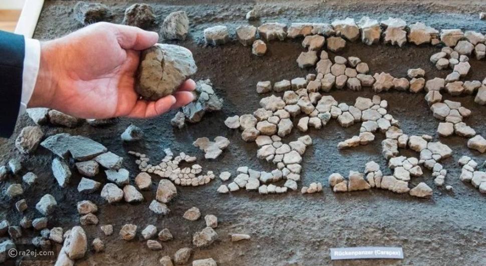 العثور على بقايا سلحفاة في ألمانيا: عاشت قبل 11 مليون سنة