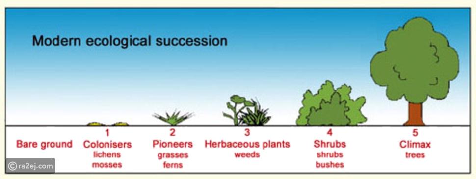 ما هو أول نبات على سطح الأرض: الإجابة غير متوقعة