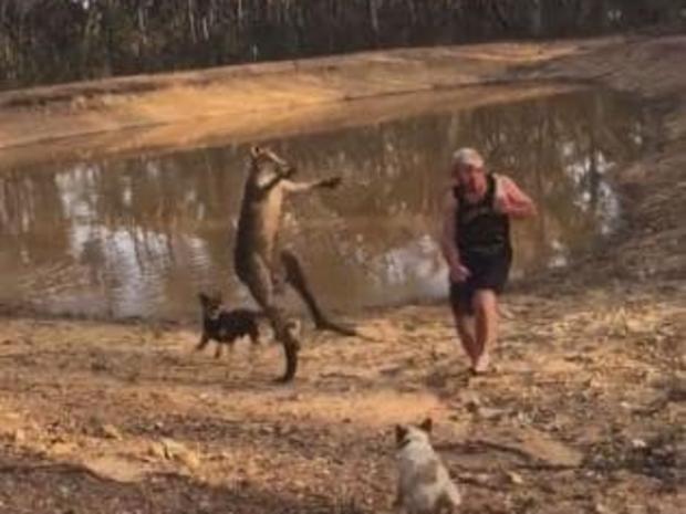 الأب كان يحاول حماية الكلبين
