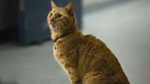 فيديو: قطة صغيرة تنقذ حياة طفل رضيع من موت محقق