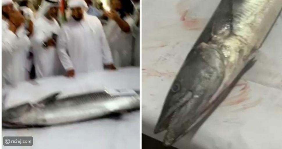 فيديو وصلت لسعر خيالي: بيع سمكة لصالح أعمال الخير في الإمارات