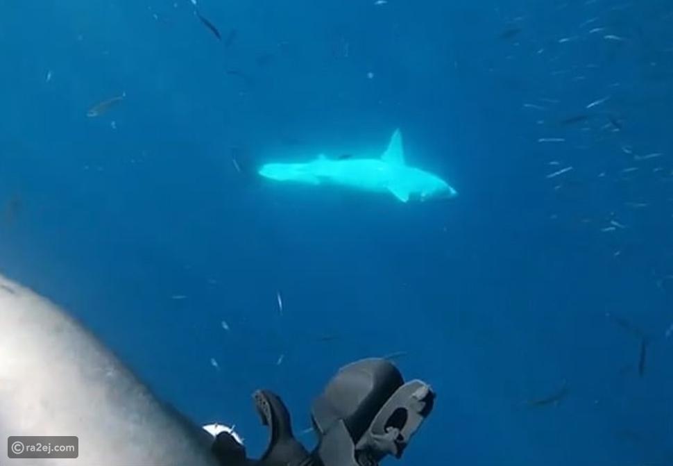 فيديو لحظات مرعبة: سمكة قرش اقتحمت قفص مجموعة من الغواصين