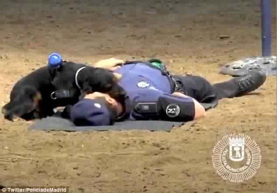 فيديو: كلب ينجح في إنعاش قلب ضابط شرطة!