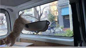 فيديو قطة تسافر بأفخم طريقة ممكن أن تتخيلها
