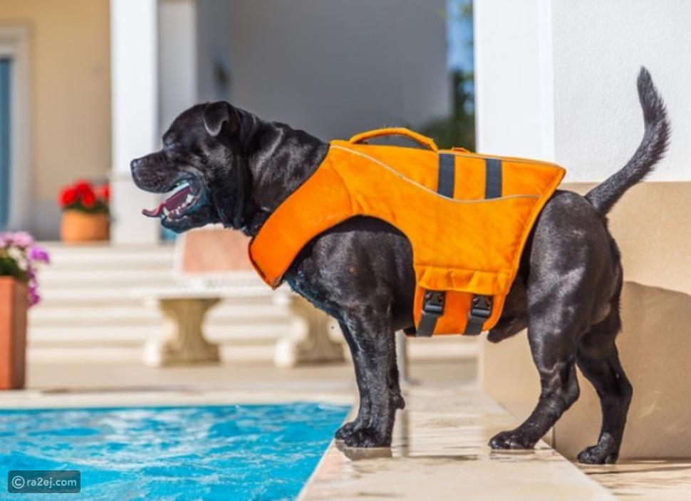 شاهد: كلب شجاع ينقذ كلبًا سقط في حمام السباحة دون تردد